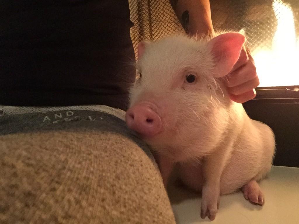 2015 Bacon Bit