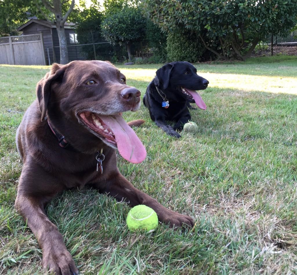2015 Host Pups